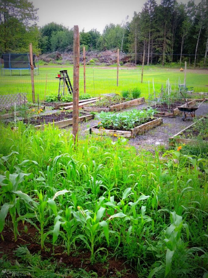 Why i love my garden why my husband hates it for How to keep deer out of a garden