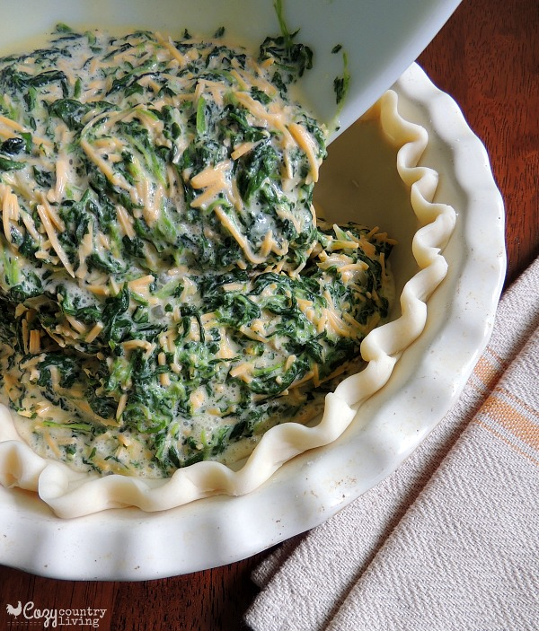 Easy Cheddar and Spinach Quiche, Chopped spinach is blended with eggs and Sharp Cheddar Cheese then baked in a pie crust for a tasty and filling meal that can be on your table in a little over 30 minutes.